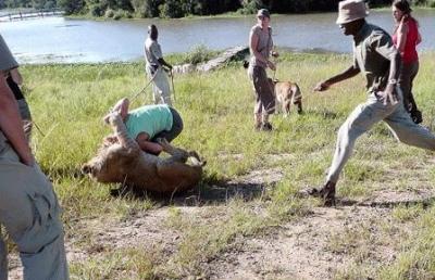 مذهلة لهجوم سائحة بريطانية زيمبابوي 2.jpg