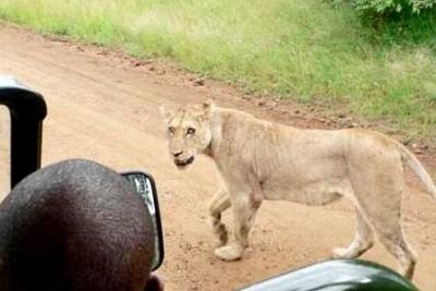 سياقة السيارة في افريقيا..شاهد الصور