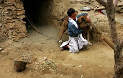 صور لقتال الكلاب من اجل كسب المال في افغانستان