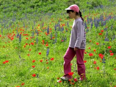 انواع النباتات البرية المميزة في فلسطين مع الصور 1
