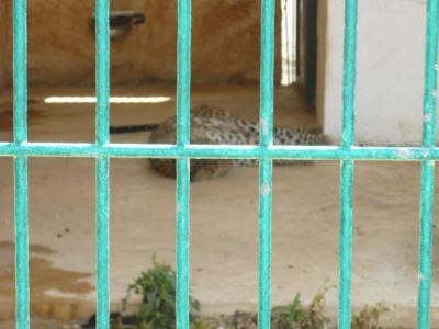 صور حديقة الحيوانات بمدينة قلقيلية في الضفة الغربية