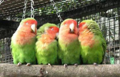 تنام الحيوانات 38778246011.jpg