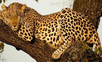 تنام الحيوانات 3877824605.jpg