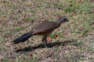 معلومات شيقة عن الطيور 38783966627