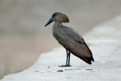 معلومات شيقة عن الطيور 38783966629
