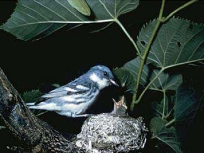 معلومات شيقة عن الطيور 38783966634