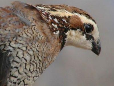 معلومات شيقة عن الطيور 38783966635