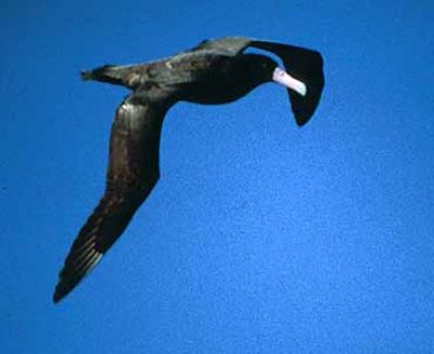 معلومات شيقة عن الطيور 38783966636