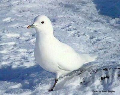 معلومات شيقة عن الطيور 38783966637