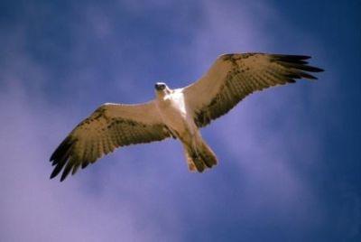 معلومات شيقة عن الطيور 38783966639