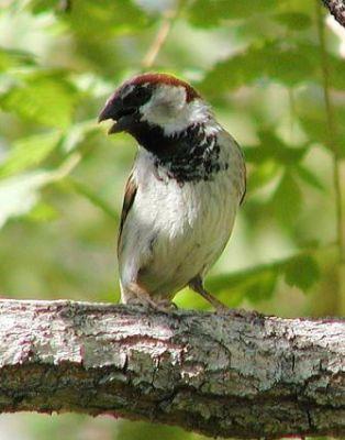 معلومات شيقة عن الطيور 38783966640