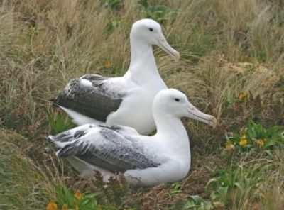 معلومات شيقة عن الطيور 38783966641