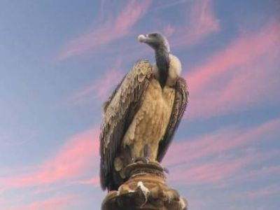معلومات شيقة عن الطيور 38783966642