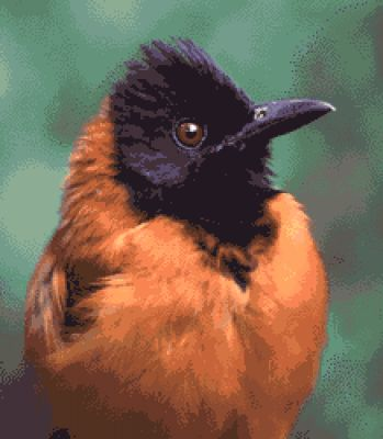 معلومات شيقة عن الطيور 38783966644