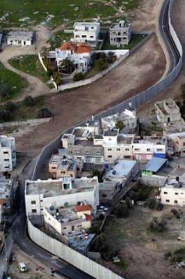 الافعى الاسرائيلية الصخرية في الضفة الغربية 3884059194.jpg