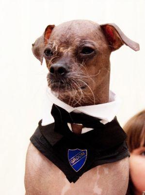 أغلى حفل زفاف فى العالم والعريس كلب 3907333103.jpg