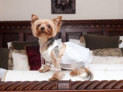 أغلى حفل زفاف فى العالم والعريس كلب 3907333104.jpg