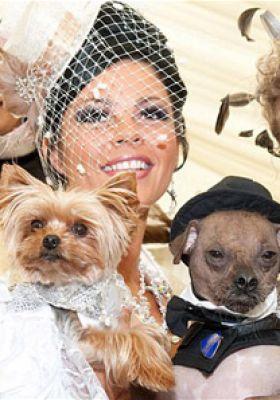 أغلى حفل زفاف فى العالم والعريس كلب 3907333105.jpg