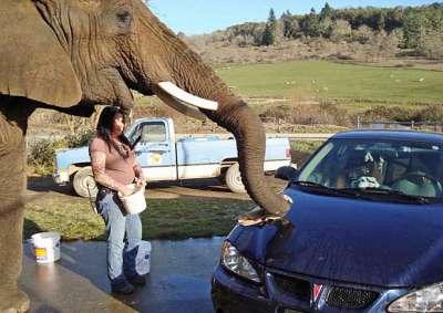 فيل تحت الطلب