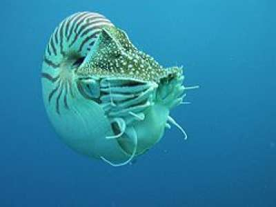 عجائب عالم البحار