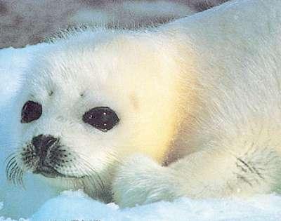 بالصور.... عجائب عالم البحار