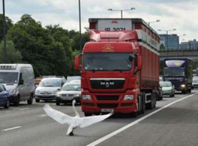 طير الاوز يعطل  حركة السير في لندن 3909762628.jpg