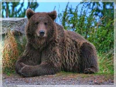 صور ومناظر طبيعية من رومانيا 3909763128