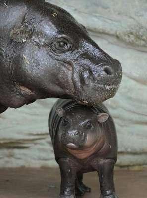 اعضاء جدد فى مملكة الحيوانات.....!!!!