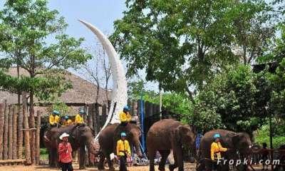 بالصور.. الاحتفال بعيد الفيل تايلاند 3909766688.jpg
