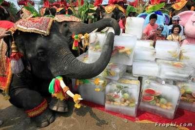 بالصور.. الاحتفال بعيد الفيل تايلاند 3909766690.jpg