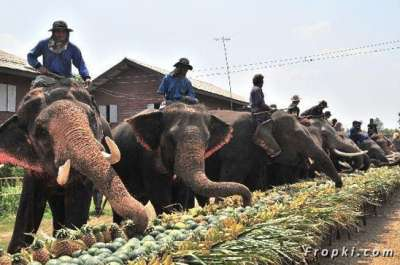 بالصور.. الاحتفال بعيد الفيل تايلاند 3909766691.jpg