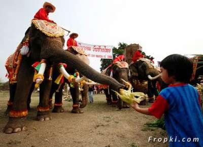 بالصور.. الاحتفال بعيد الفيل تايلاند 3909766693.jpg