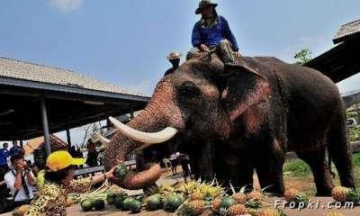 بالصور.. الاحتفال بعيد الفيل تايلاند 3909766695.jpg