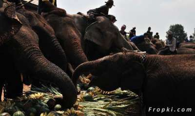 بالصور.. الاحتفال بعيد الفيل تايلاند 3909766696.jpg