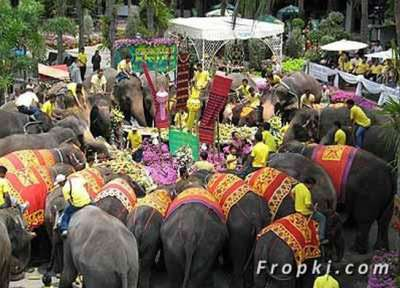 بالصور.. الاحتفال بعيد الفيل تايلاند 3909766697.jpg