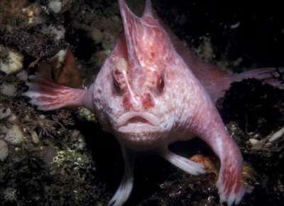 بالصور.. أسماك لا تعرف السباحة