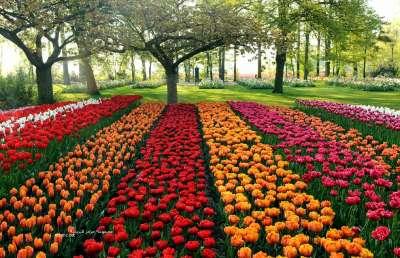حل فصل الربيع 3909772361.jpg