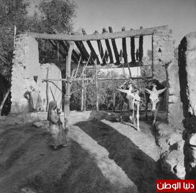 بصور رونق السعودية 1942م 3909773812.jpg