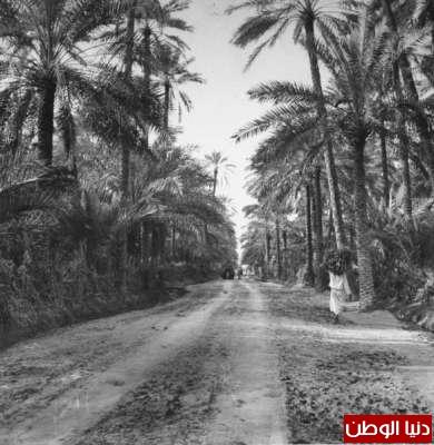 بصور رونق السعودية 1942م 3909773819.jpg