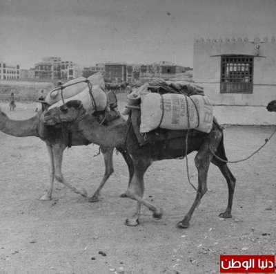 بصور رونق السعودية 1942م 3909773854.jpg
