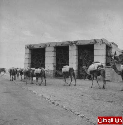 بصور رونق السعودية 1942م 3909773859.jpg