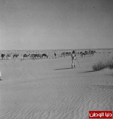 بصور رونق السعودية 1942م 3909773860.jpg