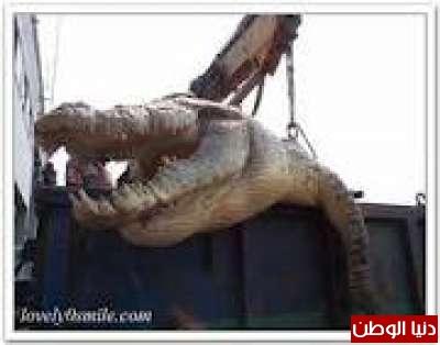 أكبر تمساح في العالم يوجد في الفلبين