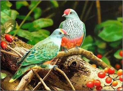 اسباب تغريد الطيور عند الفجر 3909778803.jpg