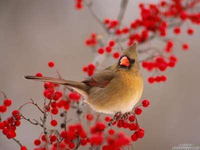 اسباب تغريد الطيور عند الفجر 3909778804.jpg