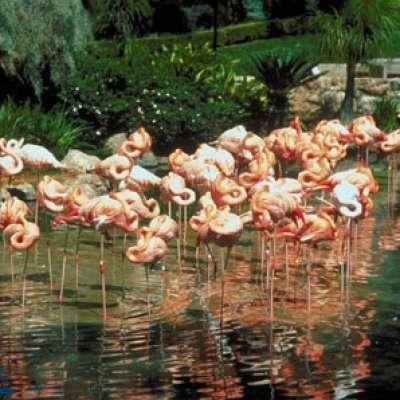 حدائق الحيوان حول العالم