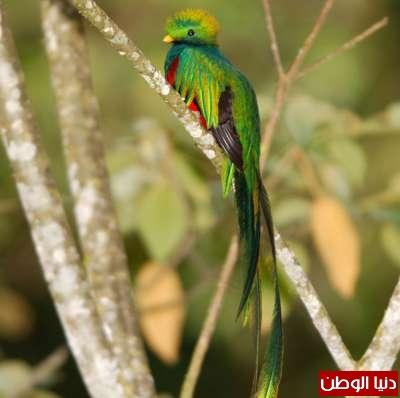 أجمل الطيور في العالم