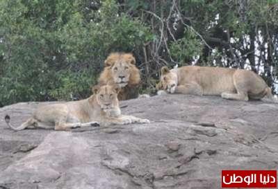 حقائق غريبة عن الحيوانات بالصور والفيديو 3909783815.jpg