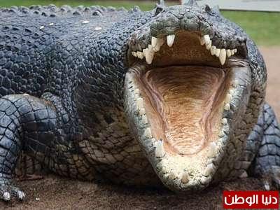 حقائق غريبة عن الحيوانات بالصور والفيديو 3909783817.jpg