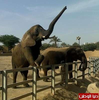 حقائق غريبة عن الحيوانات بالصور والفيديو 3909783819.jpg